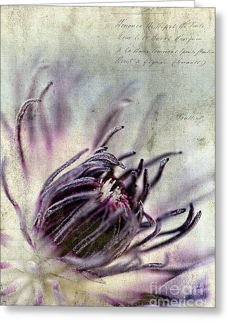 Inflorescence Greeting Cards - Inside Beauty Greeting Card by Darren Fisher