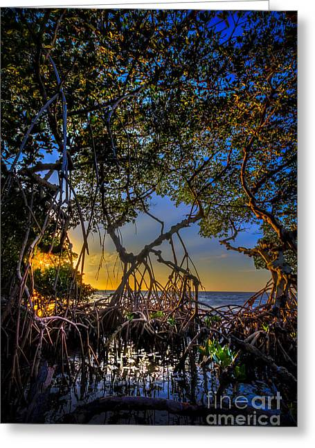 Gulf Of Mexico Scenes Greeting Cards - Inside Looking Out Greeting Card by Marvin Spates