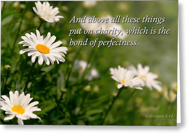 Devotional Photographs Greeting Cards - Inspirational - Daisy - Colossians 3-14 Greeting Card by Mike Savad