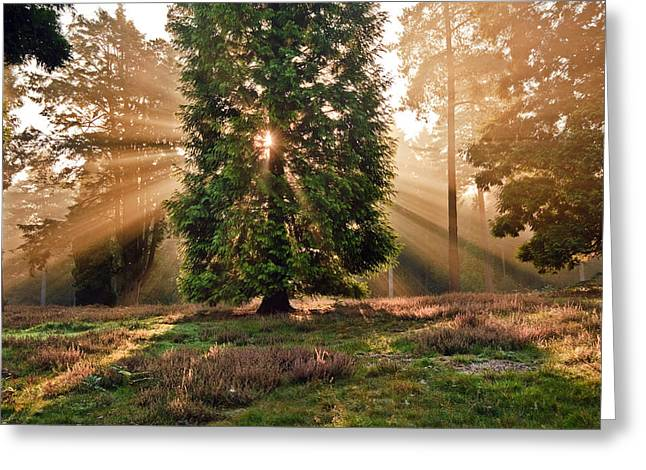 God Beams Greeting Cards - Inspirational dawn sun burst through trees in forest Autumn Fall Greeting Card by Matthew Gibson