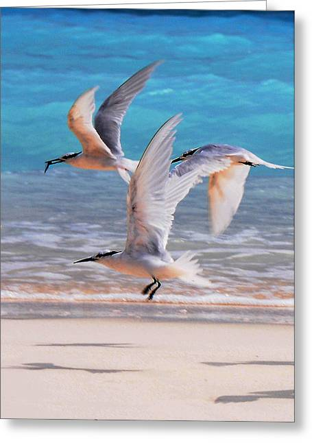 Tern Greeting Cards - Inspirational Flight Greeting Card by Jenny Rainbow