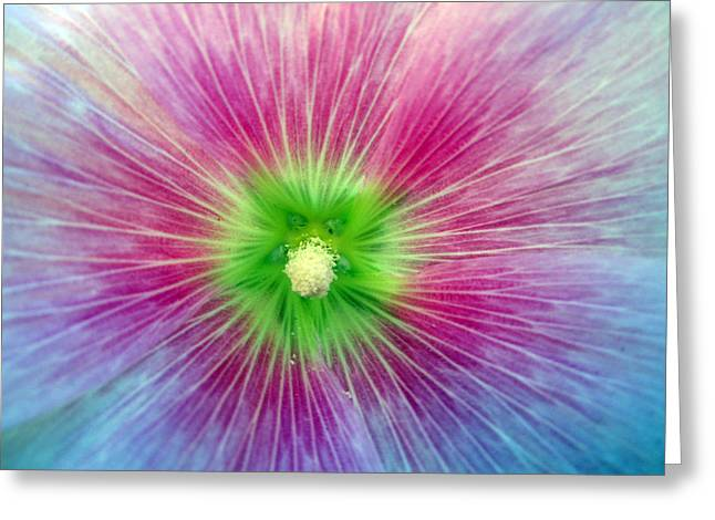 Close Focus Nature Scene Greeting Cards - Inspire Greeting Card by Mike Podhorzer