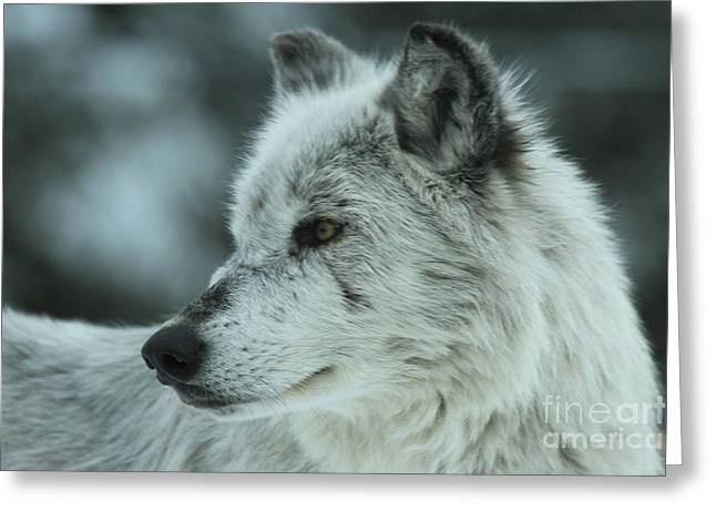 West Yellowstone Greeting Cards - Intensity Greeting Card by Adam Jewell