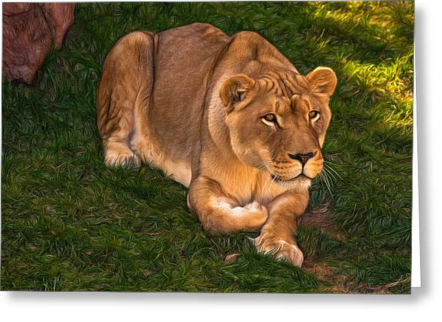 Lioness Greeting Cards - Intensity - Paint Greeting Card by Steve Harrington
