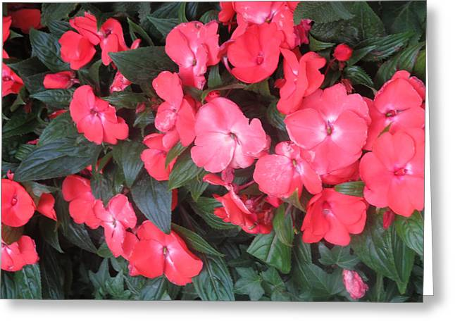 Wife Greeting Cards - INTERIOR DECORATIONS Butterfly Garden Flowers Romantic at LAS VEGAS Greeting Card by Navin Joshi