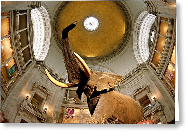 Square Image Greeting Cards - Interiors Of A Museum, National Museum Greeting Card by Panoramic Images