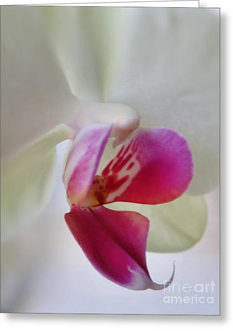 Flower Still Life Prints Greeting Cards - Intimacy - White Orchid Greeting Card by Ella Kaye Dickey