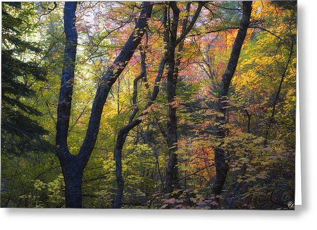West Fork Greeting Cards - Intimate Forest Greeting Card by Peter Coskun