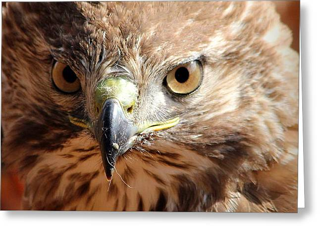 Hunting Bird Greeting Cards - Intimidation Too Greeting Card by Reid Callaway