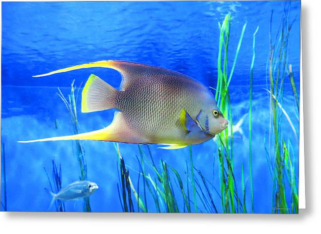 Scuba Diving Mixed Media Greeting Cards - Into Blue - Tropical Fish by Sharon Cummings Greeting Card by Sharon Cummings