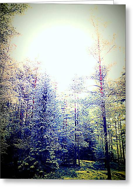 Winter Promise Greeting Cards - Into Silence Greeting Card by Hilde Widerberg