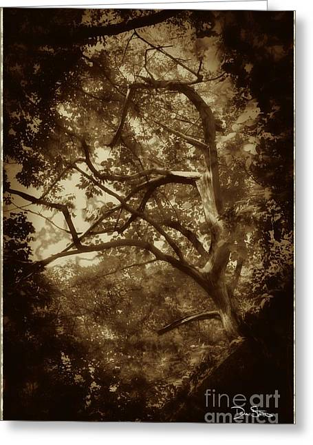 Ghostly Greeting Cards - Into The Dark Wood Greeting Card by Dan Stone