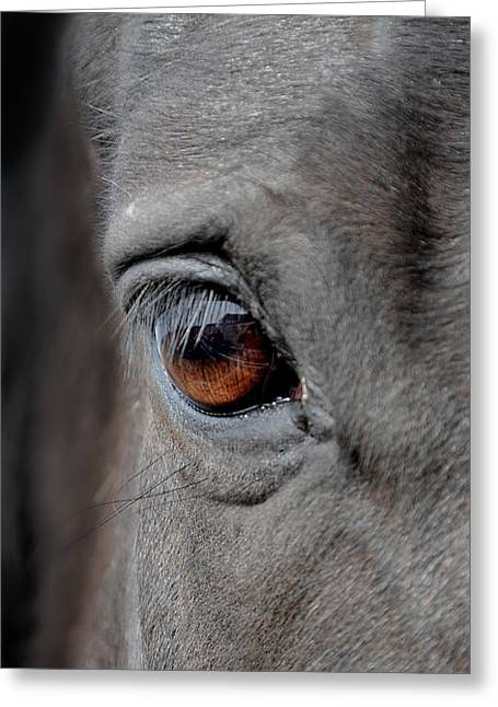 Horse Photography Greeting Cards - Into the Deep Greeting Card by Renee Forth-Fukumoto