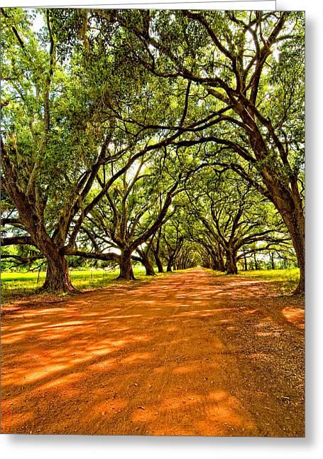 Evergreen Plantation Photographs Greeting Cards - Into the Deep South Greeting Card by Steve Harrington