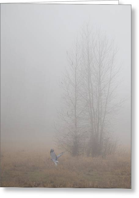 Ghostly Greeting Cards - Into the Fog Greeting Card by Angie Vogel