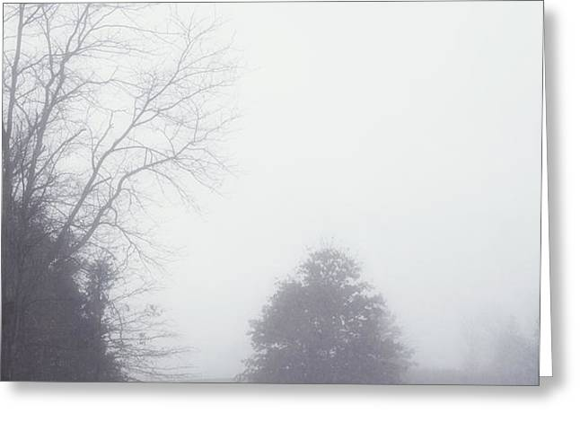 Into the Fog Greeting Card by Kay Pickens