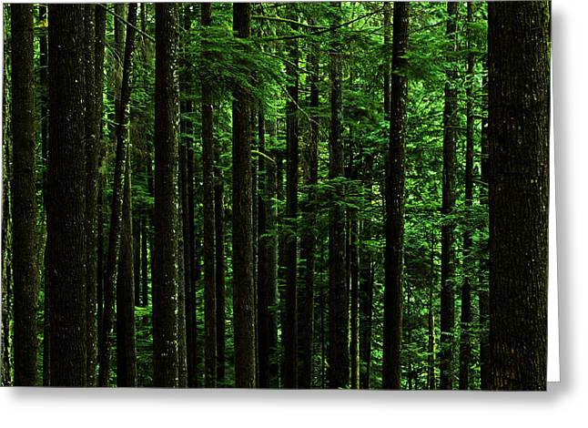 Intrigue Greeting Cards - Into The Forest Darkly Greeting Card by Connie Handscomb