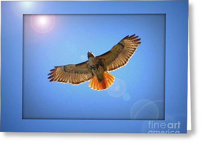 Red Shouldered Hawk Greeting Cards - Into the Light Greeting Card by Carol Groenen