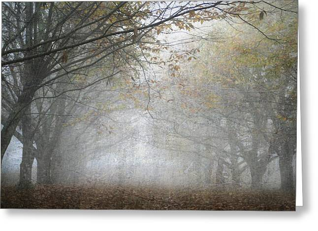 Foggy Day Greeting Cards - Into the light Greeting Card by Nomad Art And  Design