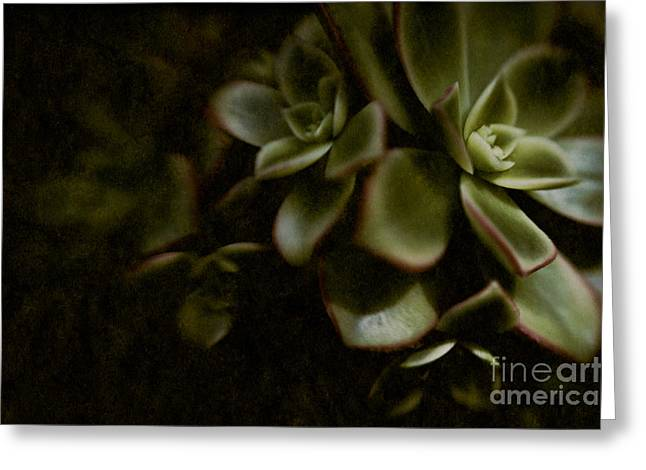 Van Dusen Botanical Garden Greeting Cards - Into the Light Greeting Card by Venetta Archer
