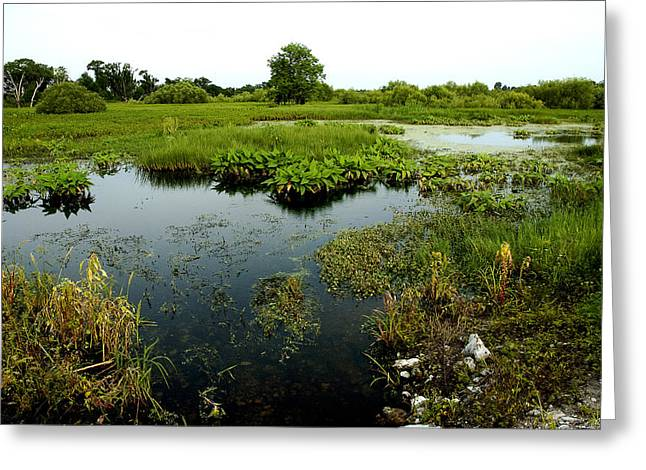 Circle B Bar Greeting Cards - Into the Marsh Greeting Card by Norman Johnson
