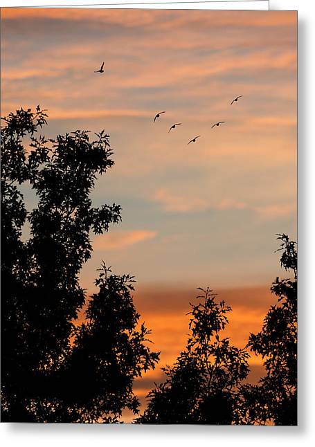 Flocks Of Ducks Greeting Cards - Into The Night - Sunsets Greeting Card by Sharon Norman