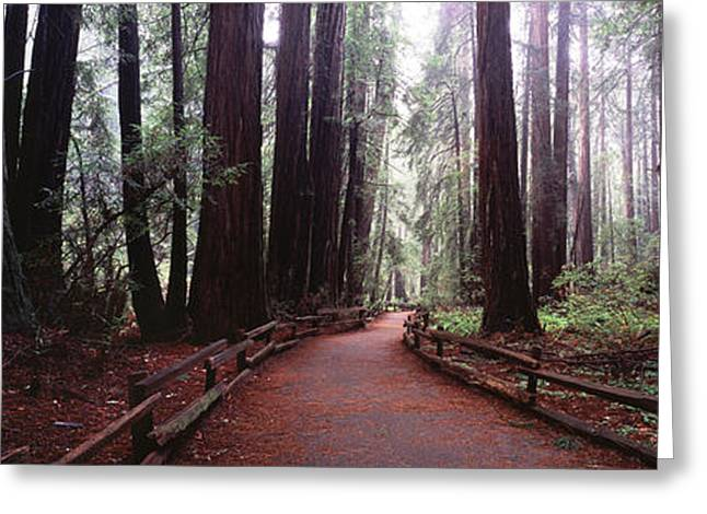 Award Greeting Cards - Into the Redwoods Greeting Card by Jason Denning