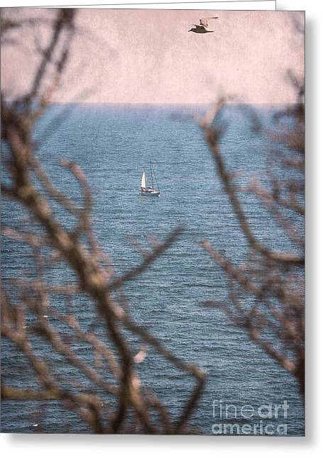 Into The Sea Greeting Card by Svetlana Sewell