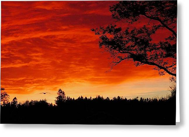 Braches Greeting Cards - Into the Sunset Greeting Card by Stuart Litoff