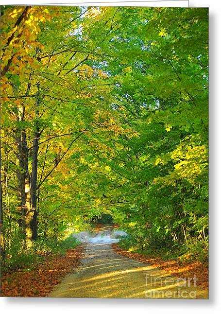 Fall Trees Greeting Cards - Into the Tree Tunnel Greeting Card by Terri Gostola