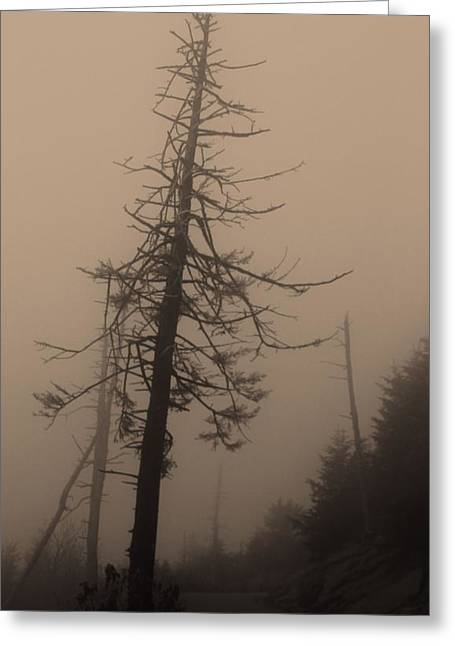 Misty Pine Photography Greeting Cards - Into The Unknown Greeting Card by Dan Sproul