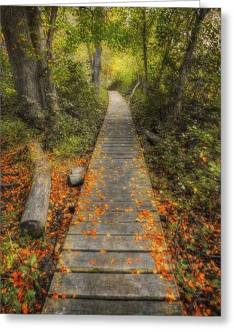 The Nature Center Greeting Cards - Into the Woods - Retzer Nature Center - Waukesha Wisconsin Greeting Card by The  Vault - Jennifer Rondinelli Reilly