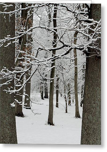 Southern Indiana Greeting Cards - Into the Woods Greeting Card by Andrea Kappler
