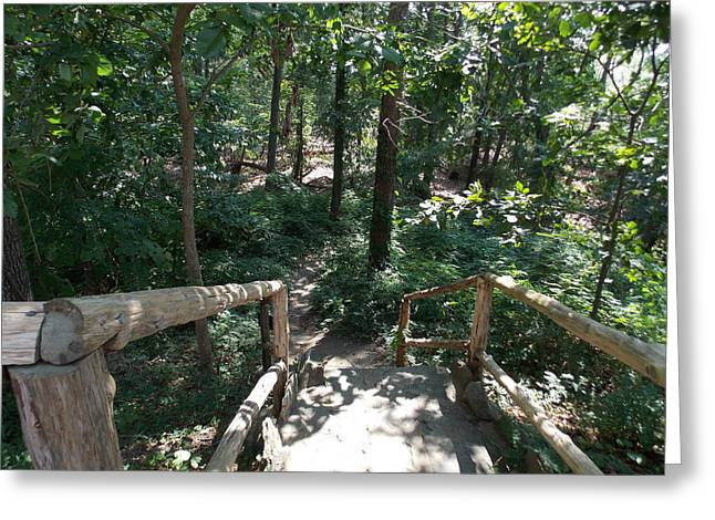 Wooden Stairs Greeting Cards - Into The Woods Greeting Card by Catherine Gagne