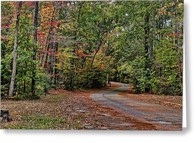 Toledo Bend Greeting Cards - Into The Woods Greeting Card by Judy Vincent
