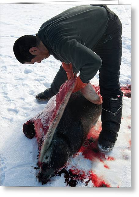 Inuit Hunter Butchering A Seal Greeting Card by Louise Murray
