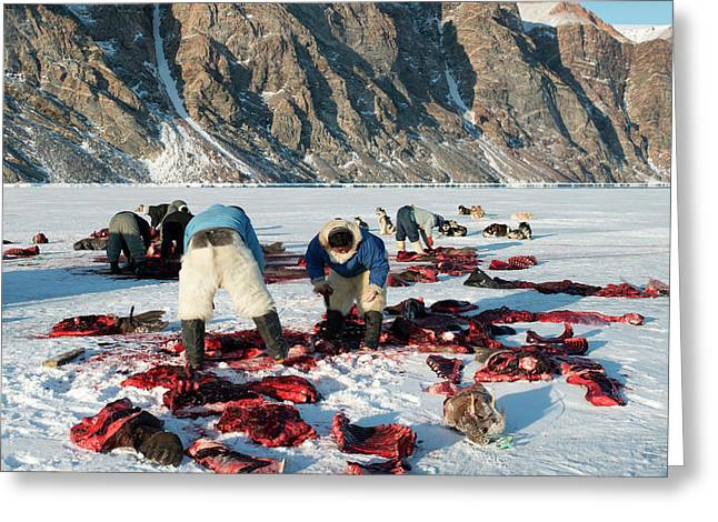 Inuit Hunters Butchering A Walrus Greeting Card by Louise Murray