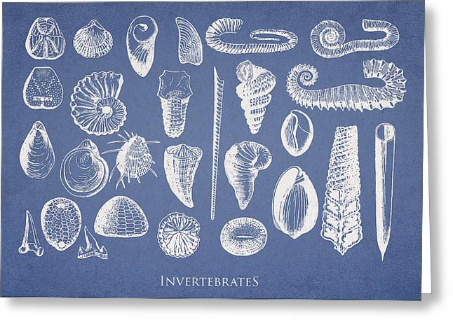 Shell Digital Greeting Cards - Invertebrates Greeting Card by Aged Pixel