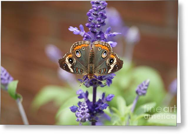 All Over Pattern Greeting Cards - Inverted buckeye. Greeting Card by Rob Luzier