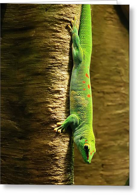 Cold Blooded Greeting Cards - Inverted Gecko Greeting Card by Jim Hughes