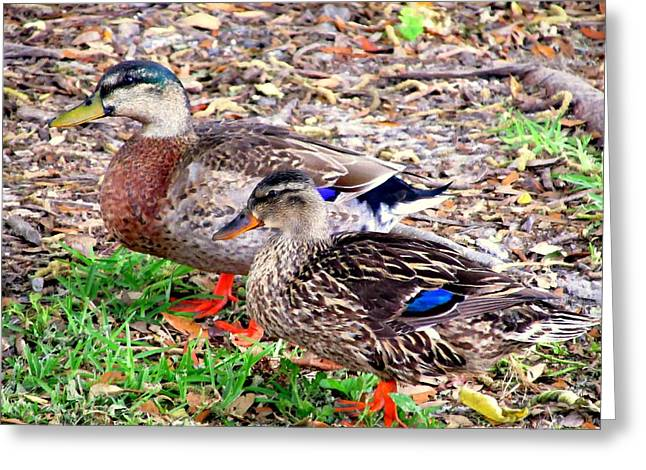 Duck Framed Prints Greeting Cards - Invisible Ducks Greeting Card by Buzz Coe