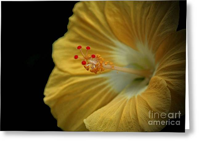 Invitation to Beauty Hibiscus Flower  Greeting Card by Inspired Nature Photography By Shelley Myke