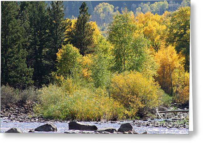 Gold Trout Greeting Cards - Inviting Trout Stream Greeting Card by Bob Hislop