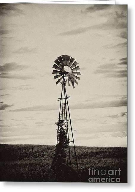 Grinding Greeting Cards - Iowa Windmill In a Corn Field Greeting Card by Wilma  Birdwell
