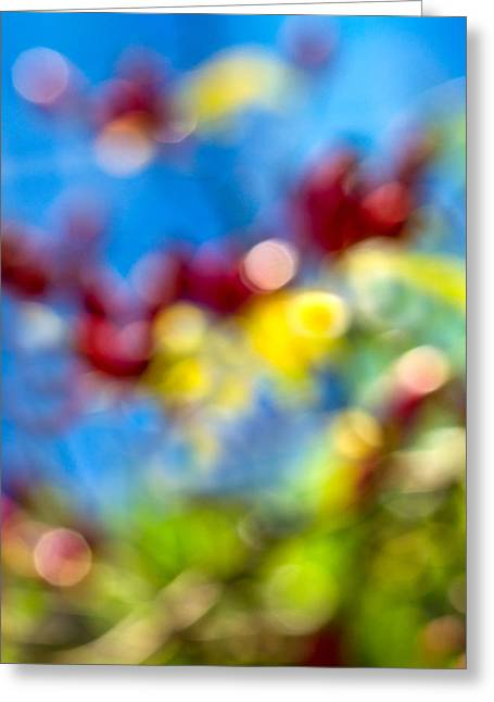 Multicolored Roses Greeting Cards - iPhone Case - Colors Of Autumn Greeting Card by Alexander Senin
