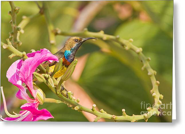 Sunbird Greeting Cards - Iridescence On A Curve Greeting Card by Ashley Vincent