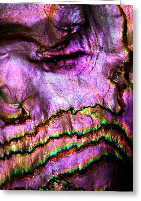 Iridescent Nacre Abalone Shell Colour Greeting Card by Paul D Stewart
