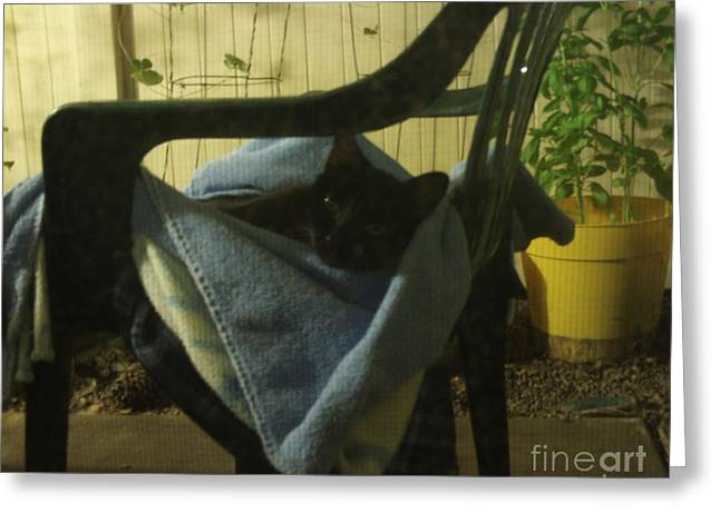 Pictures Of Cats Greeting Cards - Irina Lounging On A Chair Greeting Card by Julia Hanna