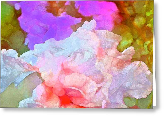 Iris 60 Greeting Card by Pamela Cooper