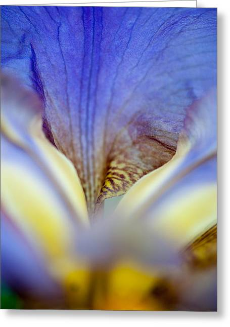 Garden Flower Vision Greeting Cards - Iris Abstract. Macro Greeting Card by Jenny Rainbow